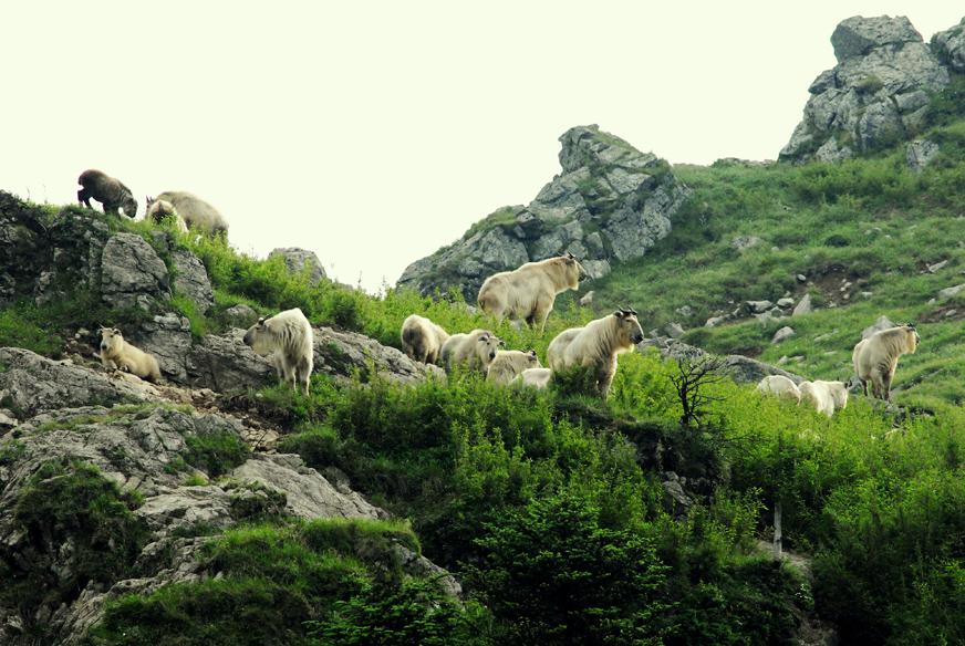 陕西佛坪国家级自然保护区的介绍完美攻略2魔域桃源国际图片