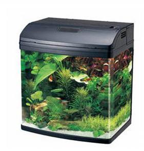我有一个佳宝r338水族箱,不知道适合养什么鱼,养几条?