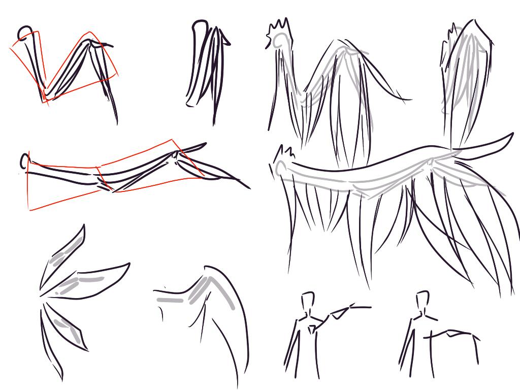另一个点是翅膀的位置,一般来说就是长在肩胛骨的地方,不过也有在肋下