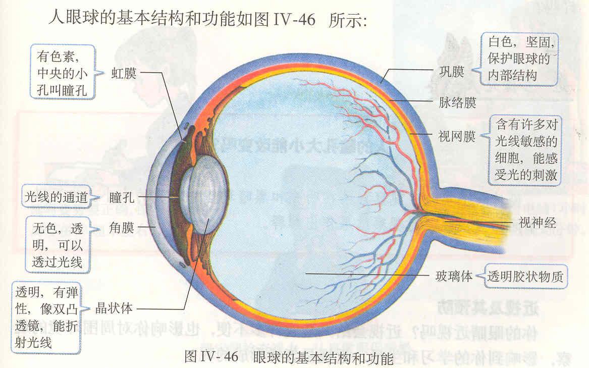 眼睛的构造图解及功能