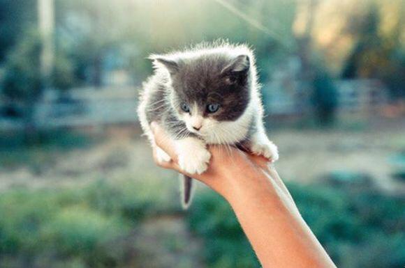 这种灰白色的猫是什么品种,好可爱