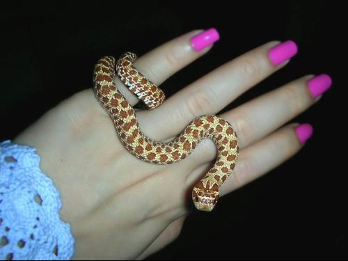 最近想买一条宠物蛇玩玩,不知道买奶蛇好还是买玉米蛇