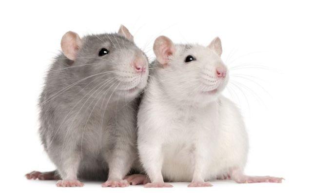 家里老鼠很多怎么办有什么土方法没?