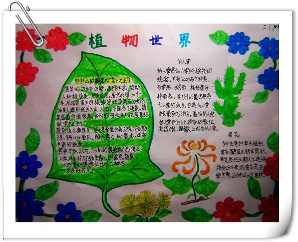 关于植物手抄报
