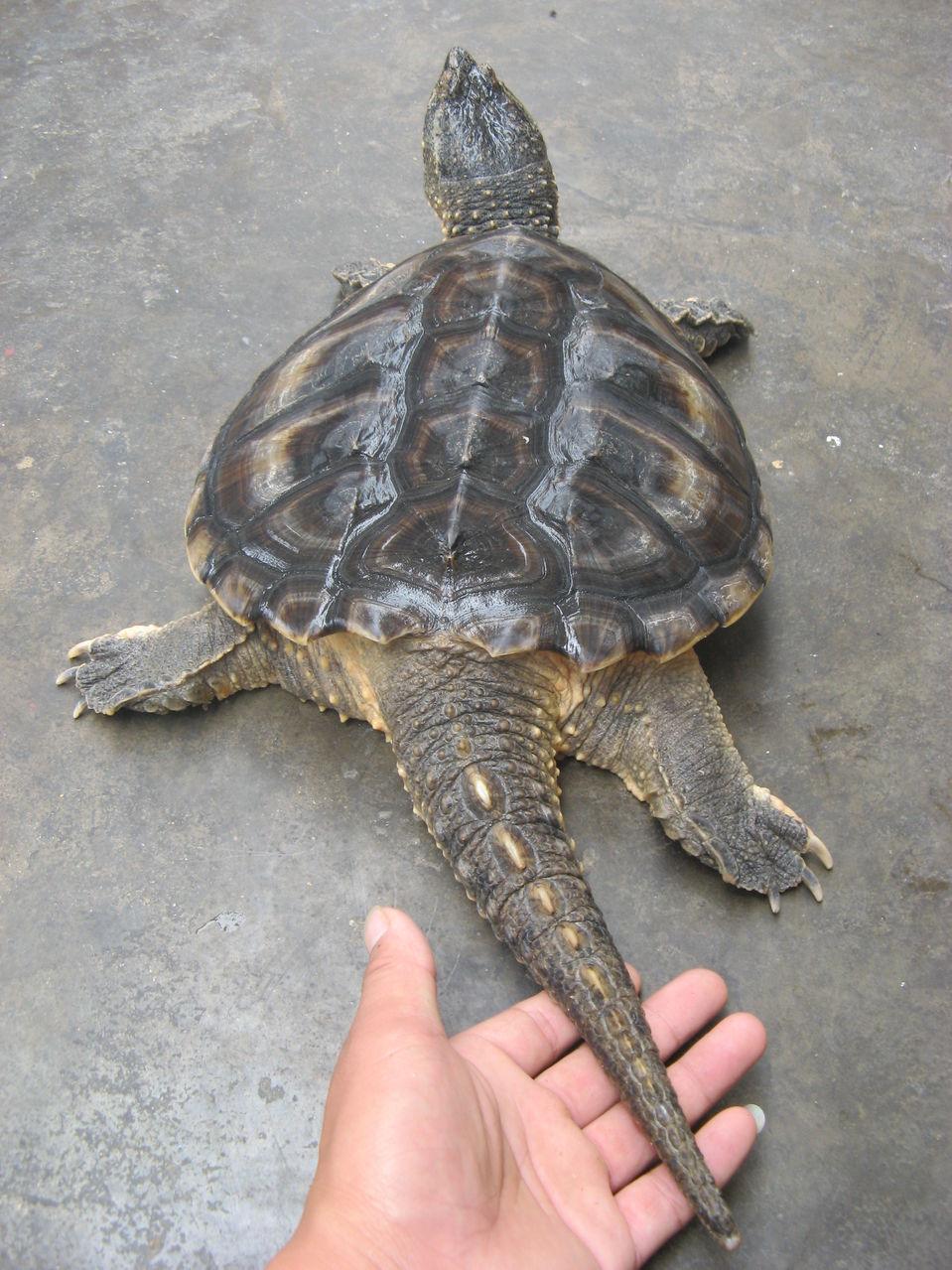 手套乌龟手工制作