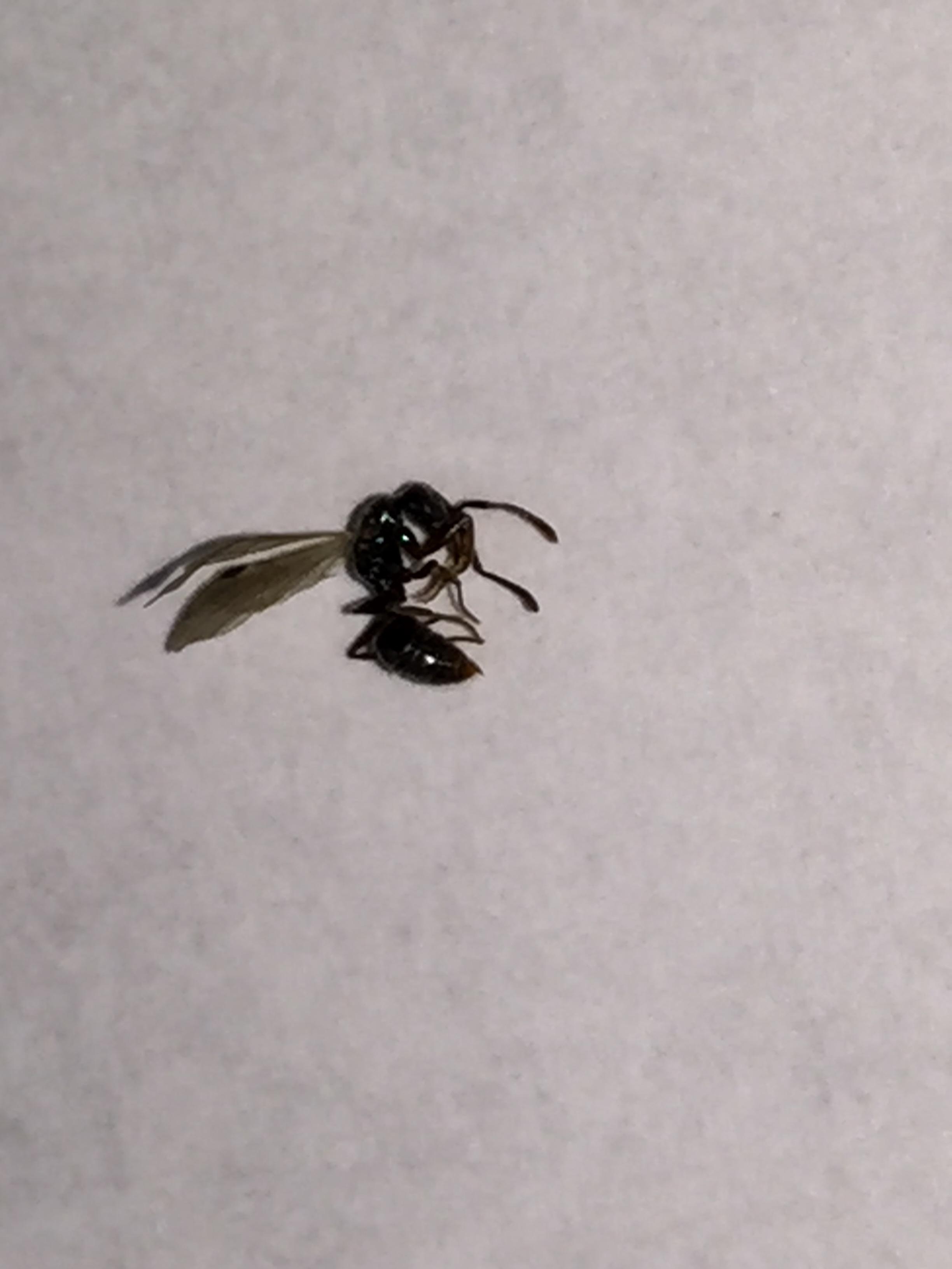 黑色的,还带翅膀的虫子,而且用手去捏它,还捏不死,身体有点硬,大概有3