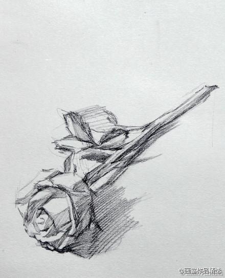 素描玫瑰花的决窍是什么?