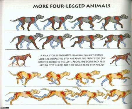 求一套四足动物运动规律图片