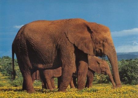 请问,大象有没有尾巴