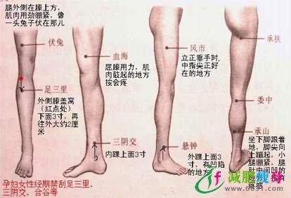 穴位减肥的足三里穴dhc腹腰瘦副作用图片
