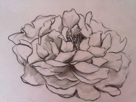 牡丹花手绘铅笔铅笔画简单一点儿好看一点儿