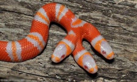 五头蛇_话说你这条是五头蛇,内容未经官方证实,在此不作评论.