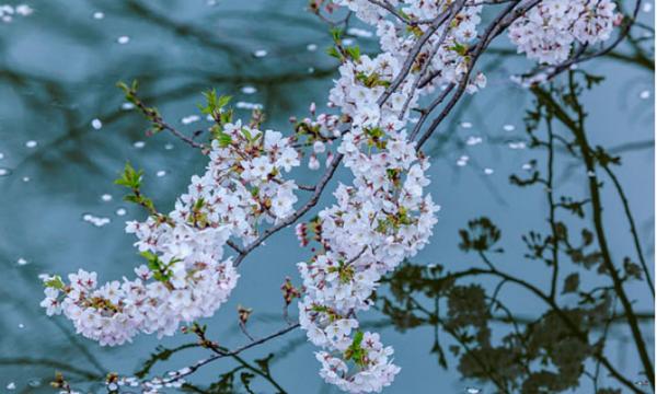 关于春天的诗句(比喻、小学、排比)大朗霖水拟人图片