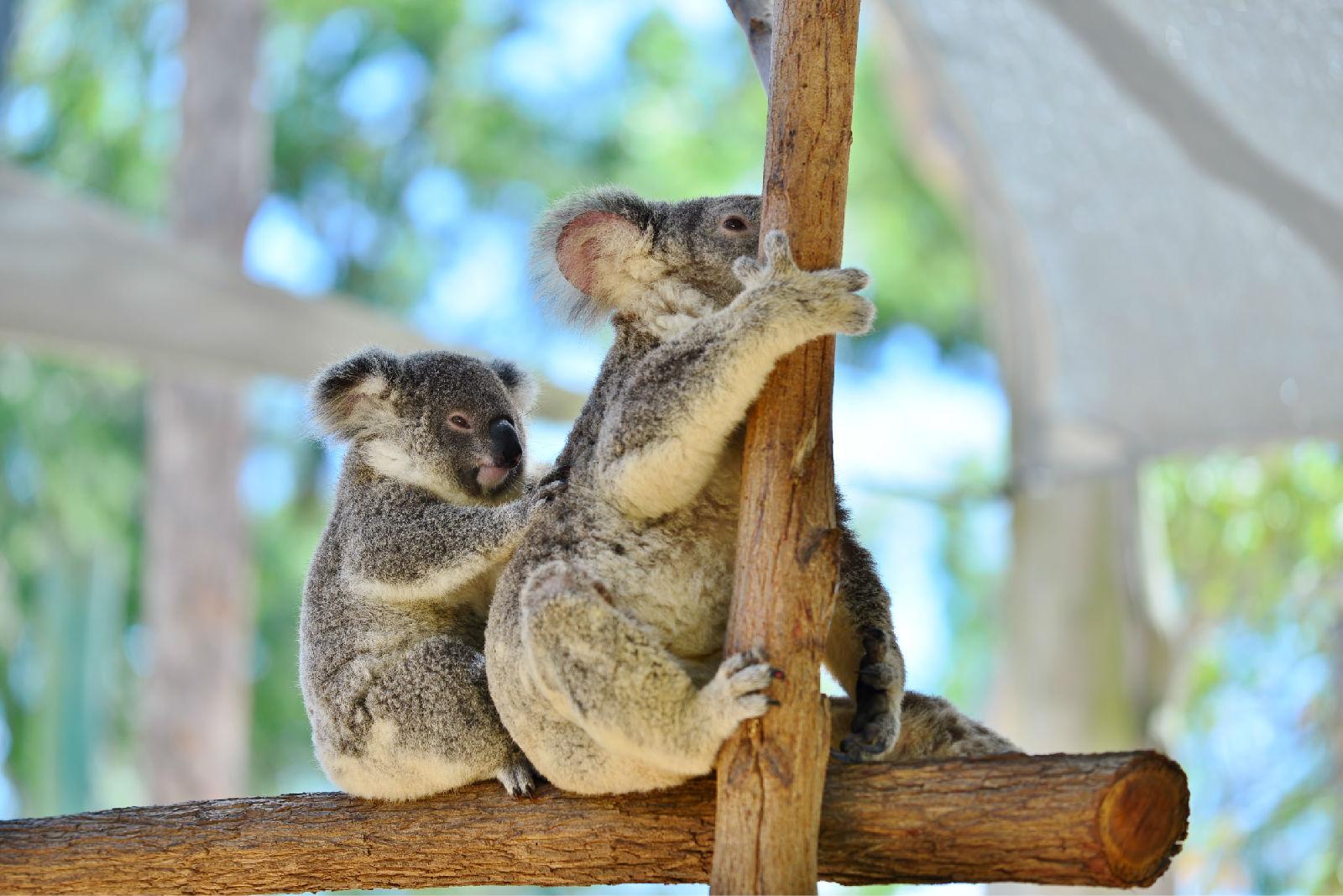 澳大利亚旅游攻略图片42
