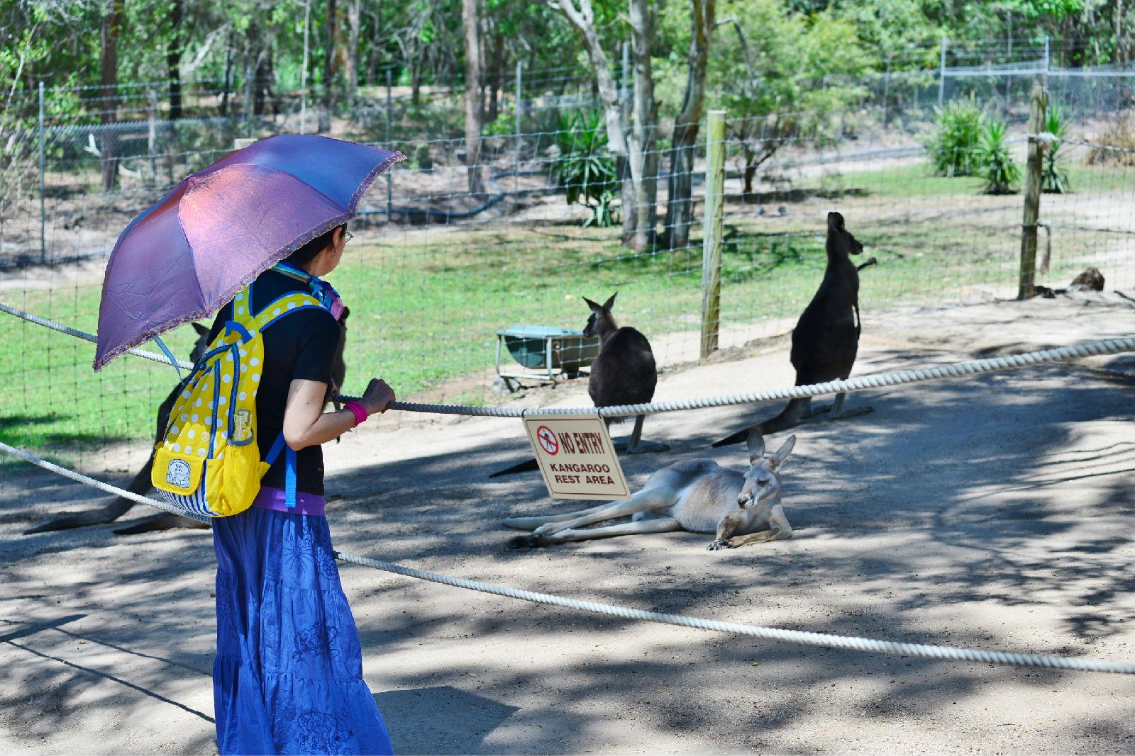 澳大利亚旅游攻略图片50