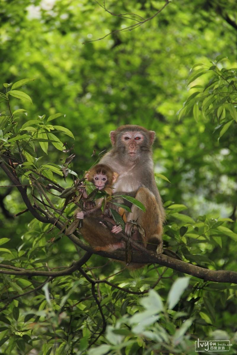 张家界国家森林公园旅游攻略图片43