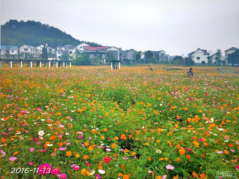 衢州旅游攻略图片172