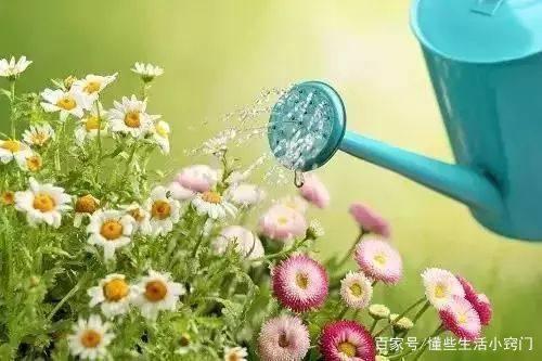 梦到给绿植浇水