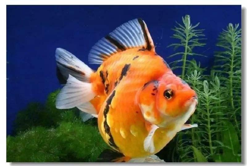 梦到喂孩子吃鱼