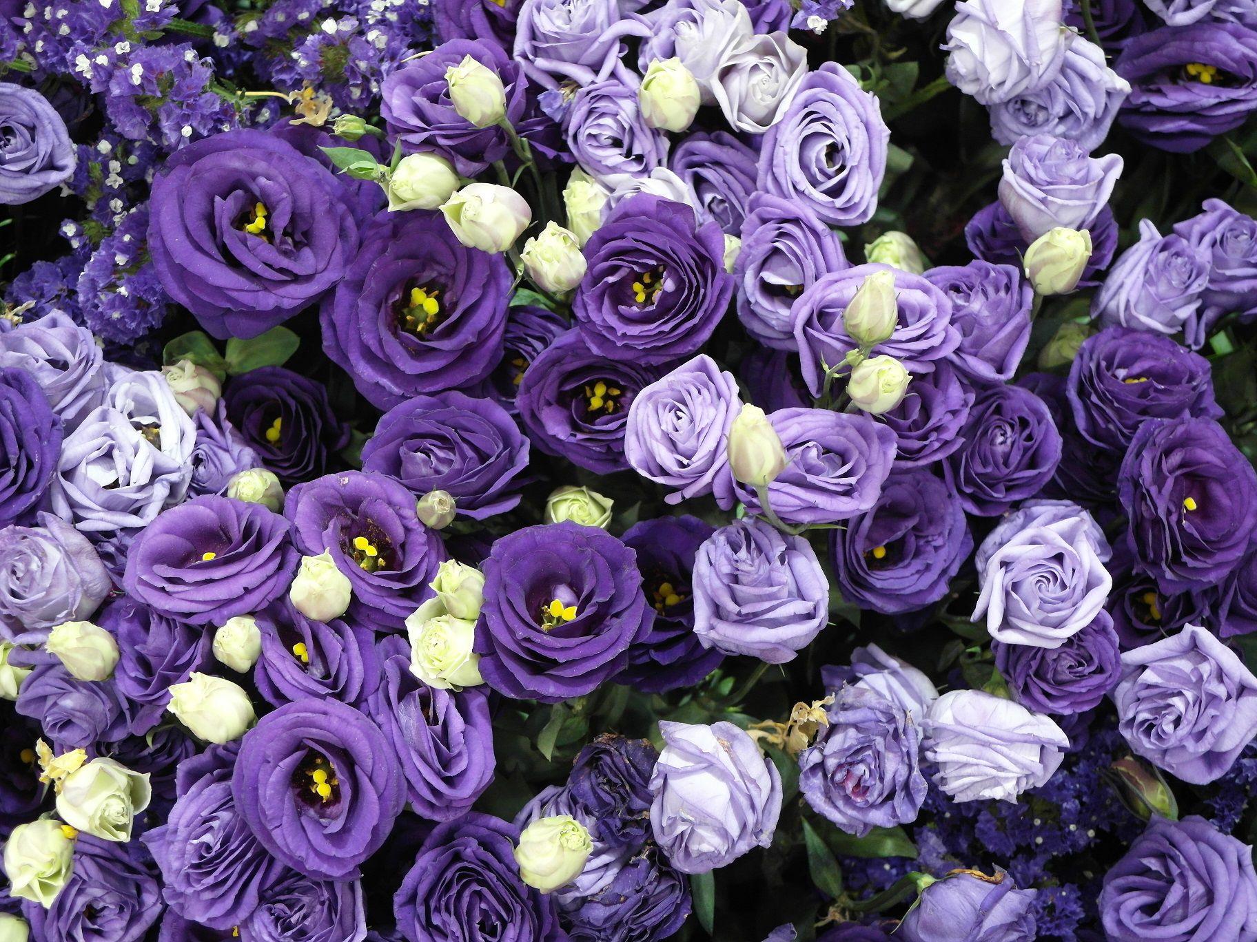 收下几朵玫瑰花代表拒绝收下几朵玫瑰花代表拒绝