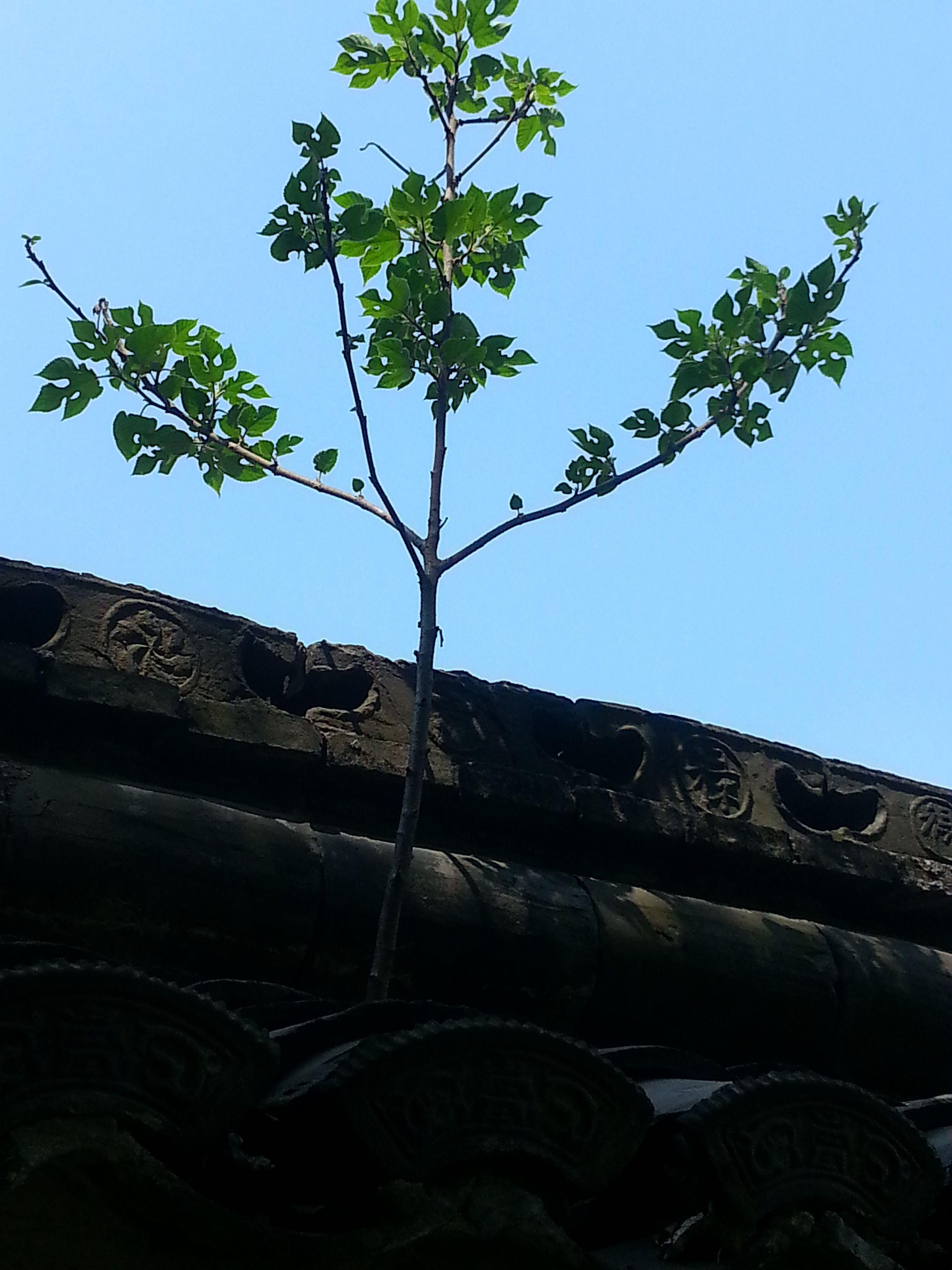 什么的树木_请问是什么植物,可以长成很大的树木_百度知道