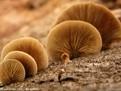 正常菌包括真菌