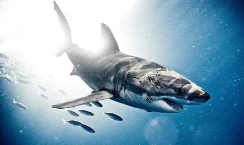 鲨鱼海洋电影_有关鲨鱼的电影_百度知道