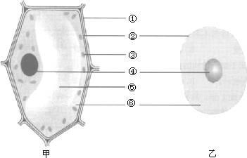 动植物细胞的异同点_识别动植物细胞,填写各部分结构名称及功能?标序号_百度知道