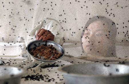 少妇吃了金苍蝇后_苍蝇最喜欢吃的东西是什么?_百度知道