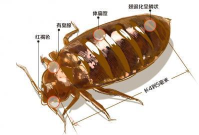臭壳虫_急,好心人。请问这是什么虫子,会吸人血吗?_百度知道