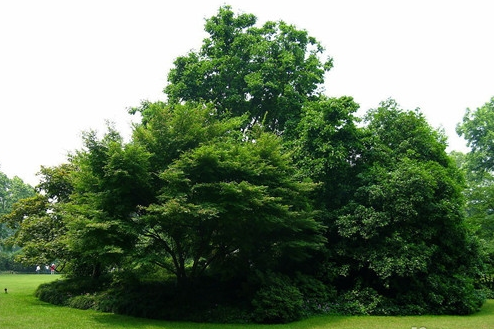 没有树会怎样_如果没有树将会怎样_百度知道
