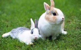 给兔子喂食的动作描写