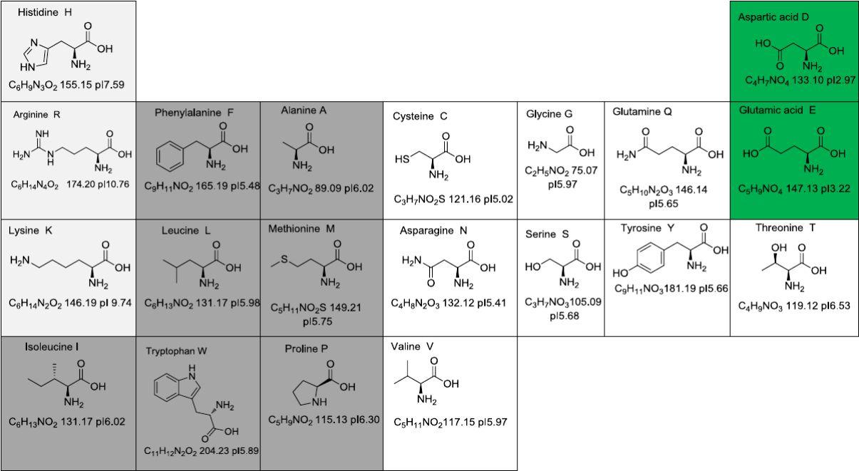 高中蛋白质分子式