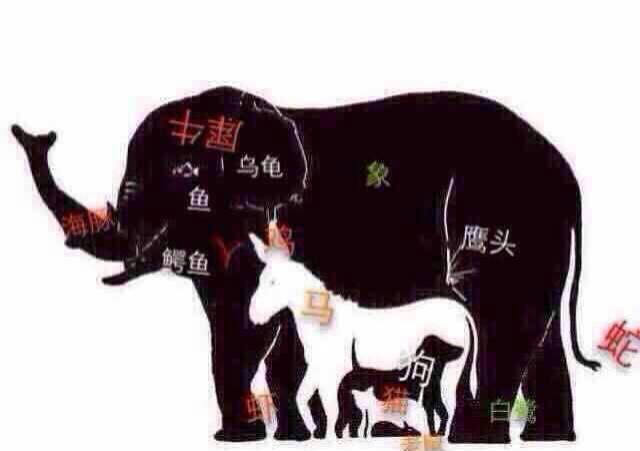 猜图几种动物_图中一共有几种动物?分别是什么_百度知道