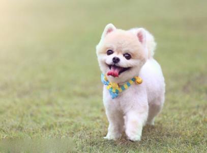 最便宜的狗_世界上最贵的狗和最便宜的狗