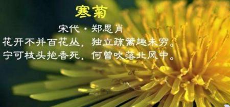 """描写桃花的优美诗词 描写""""花""""优美的诗句有哪些"""
