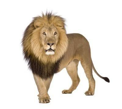 知道日报作者狮子教育的头像