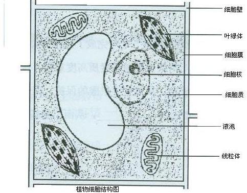 动植物细胞的异同点_画出一个动物细胞和一个植物细胞结构图,并标出结构名称_百度 ...