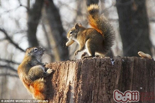 关于松鼠饲养的基本知识有哪些?