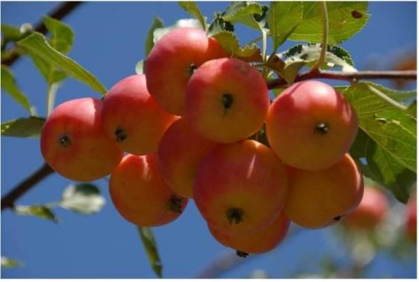 盖头诗词 带水果的古诗词 诗词歌曲 第2张