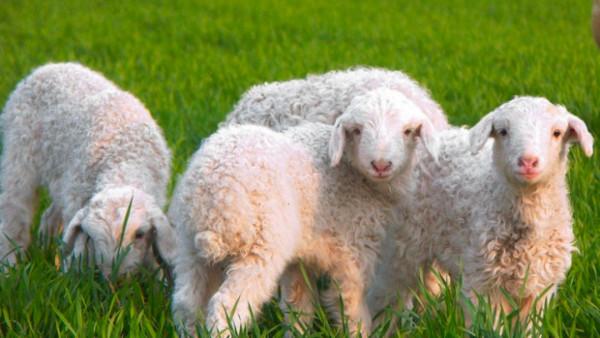 """老人常说""""360行,不如养猪放羊"""",如今还有道理吗?"""