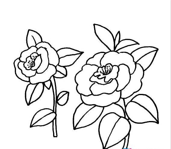 蔷薇花简笔画图片2