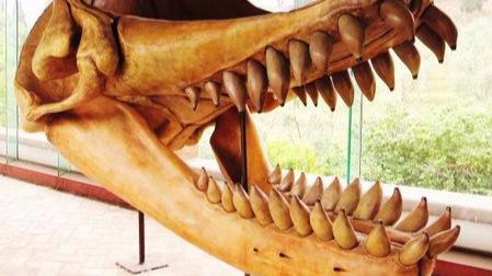 还原一条真实的《巨齿鲨》的头图