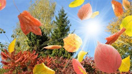 无论来源如何,水和陆地植物同样控制着光合作用