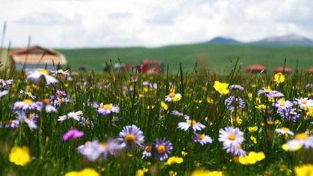 野花以多样性应对气候变化