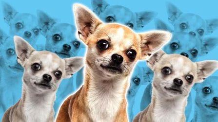 狗狗的起源:一種受到干預的進化結果!的頭圖