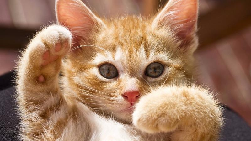 如何做一只猫见猫爱的喵星人?猫间道的生存法则的头图
