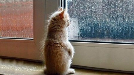 为什么猫咪总会在家门口等主人回家呢?