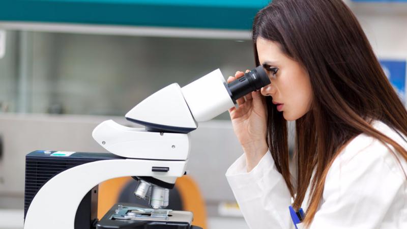 你见过显微镜下的常见食物吗