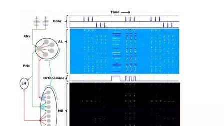 一个模仿飞蛾识别味道的神经网络,解释飞蛾的学习速度远超机器的头图